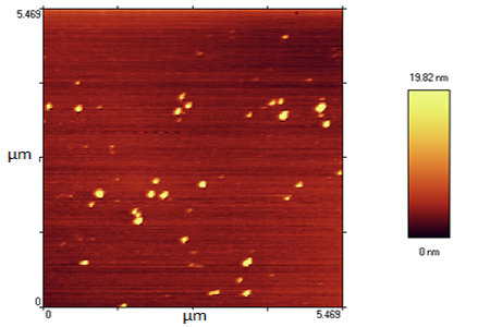 Gold nano particle AFM gallery